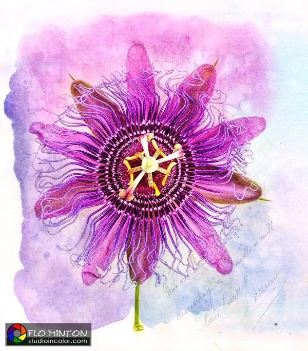 Passion flower, shot with iPhone and post processed in Photoshop using Topaz Software plugins and French Kiss Watercolor Brushes and Textures.
