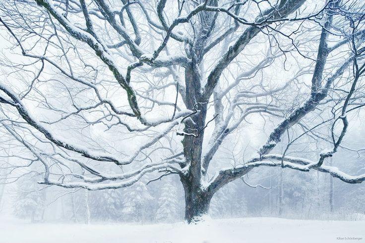 The Tree by Kilian Schönberger on 500px