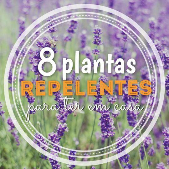 8 plantas repelentes para manter os mosquitos bem longe - Mão na Casa