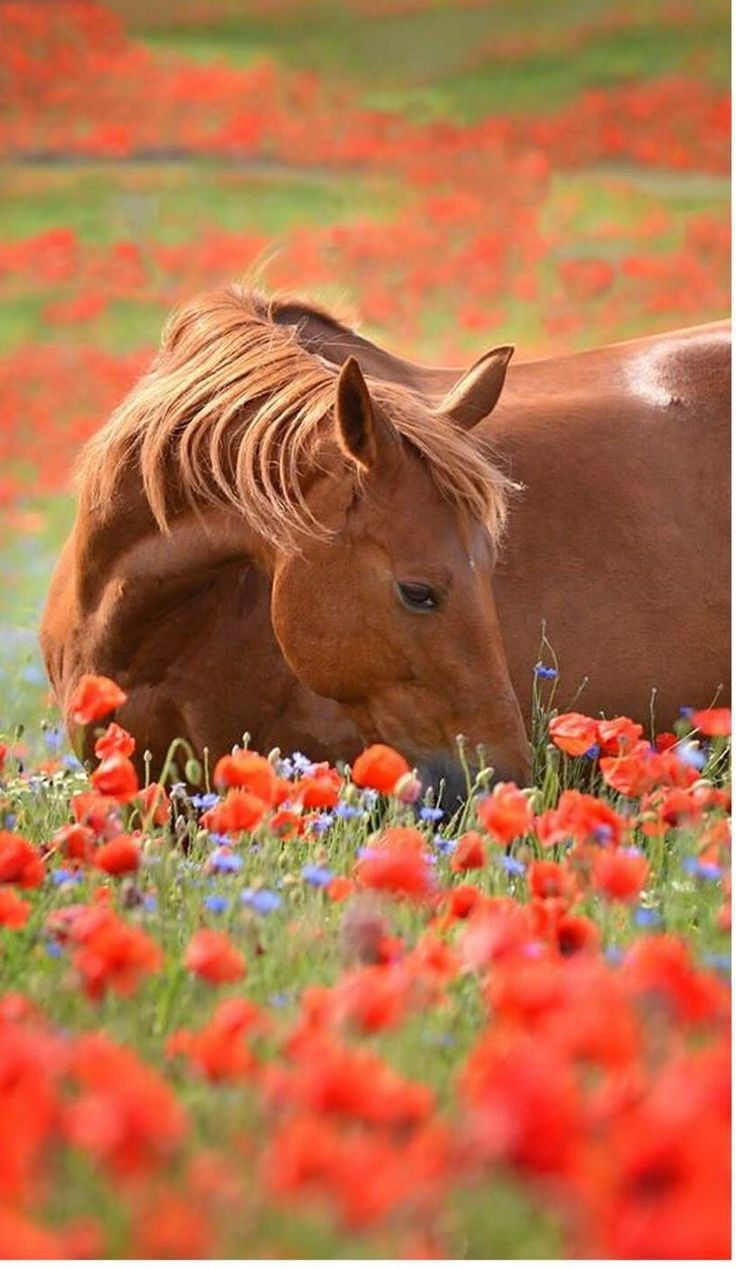 59 best images about Horse in a field of Flowers on Pinterest | White flowers, Pink flowers and ...