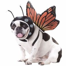 Watch your pooch go through a metamorphisis to transform with the Butterfly #Dog Costume. This butterfly costume comes with a hood to give your dog antennae and wings that strap onto her back.
