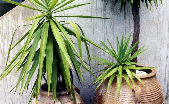 20 best Indoor images on Pinterest | Indoor house plants ...