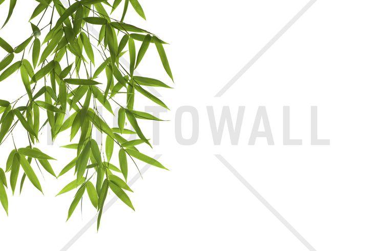Hanging Bamboo - Wall Mural & Photo Wallpaper - Photowall