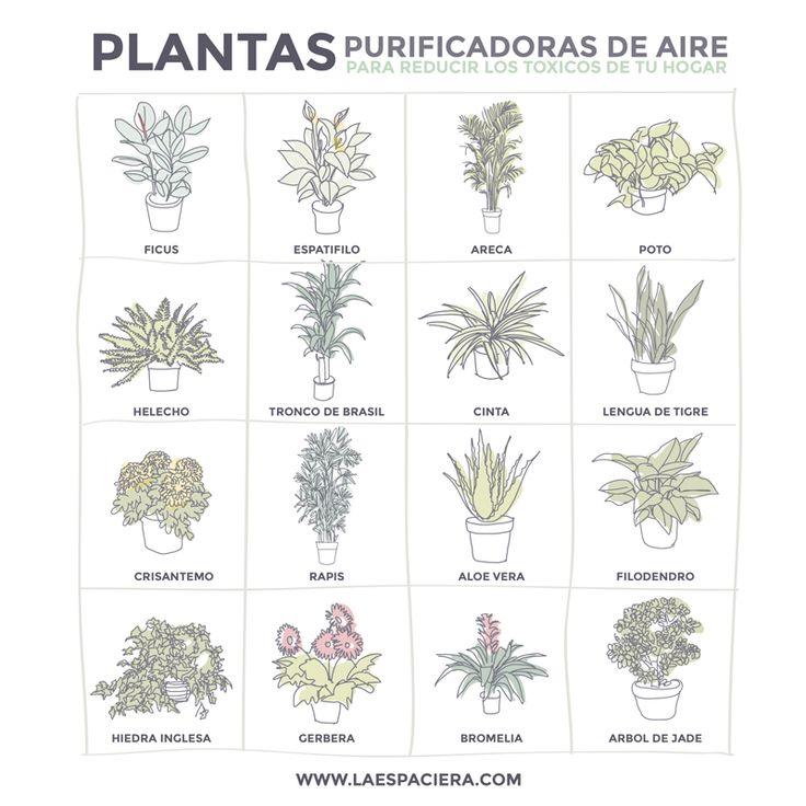 Best 25 plantas purificadoras de aire ideas on pinterest Plantas limpiadoras de aire