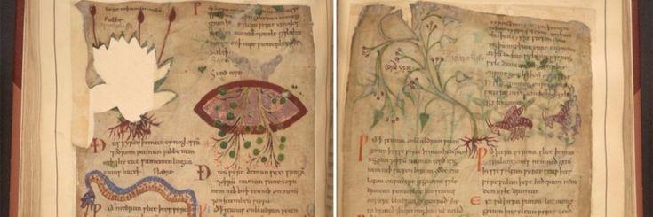 De Angelsaksische geneeskunde berustte aanvankelijk vooral op natuurlijke remedies. Van artisjokken die in wijn werden gedrenkt om stinkende oksels te genezen tot zoethoutwortel om