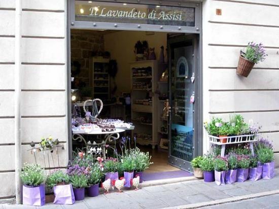 """il """"lavandeto di Assisi"""" vendita on line salvie e lavande"""