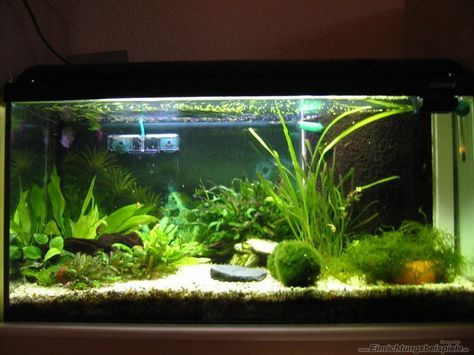 17 best ideas about nano aquarium on pinterest aquarium aquascaping and betta. Black Bedroom Furniture Sets. Home Design Ideas