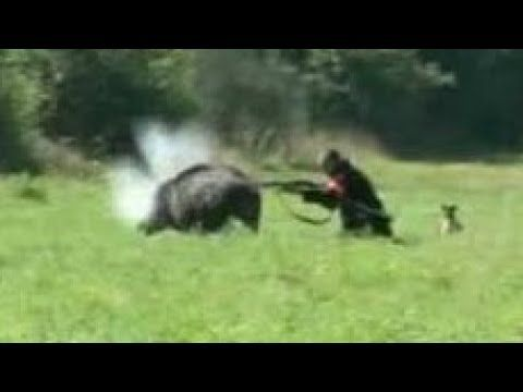 Best 5 Wild Boar Attacks Hunter | Wild Hog Attacks Compilation - Crazy Hog Hunt Caught On Video - YouTube
