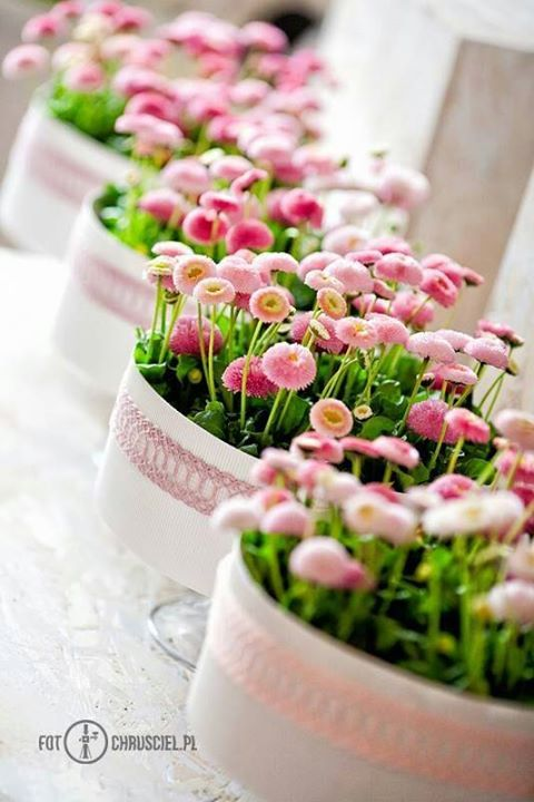English Daisy Pots. This would be really easy and cute...