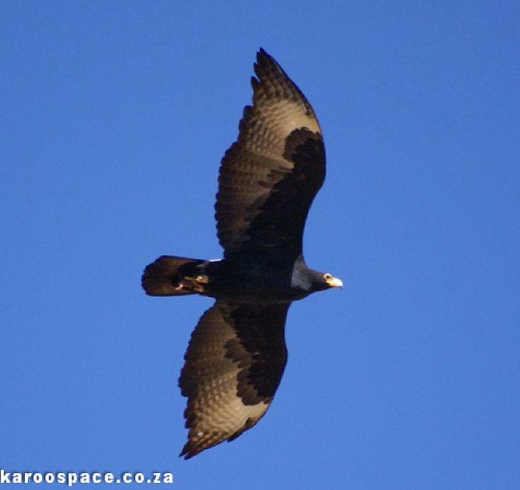 Birding in the Karoo