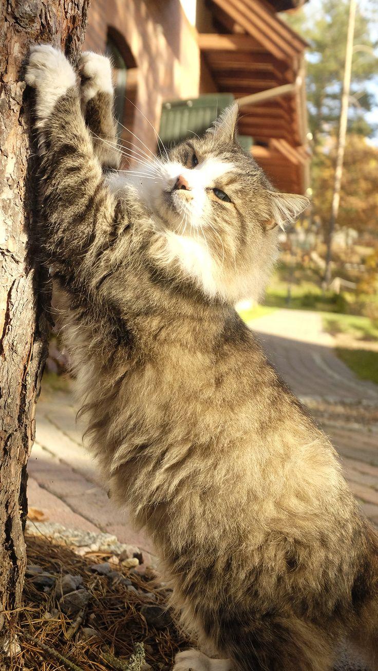 Stretching - Puszek the Cat in hotel & SPA Termy Medical WARMIA PARK (Pluski near Olsztyn, Warmia and Mazuria)
