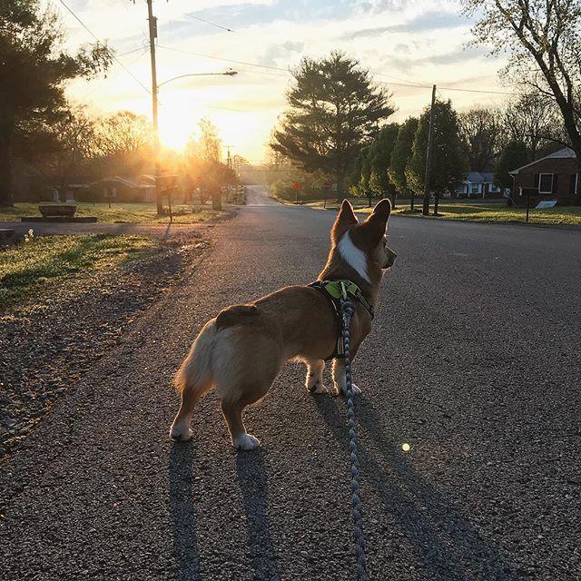 Good Morning From Nashville Tn Roadtrip Springbreak