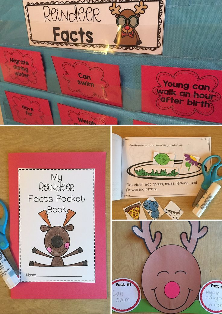 Reindeer Unit--filled with lots of great reindeer activities to engage little learners in kindergarten or first grade! Reindeer vocabulary, reindeer facts sorting, interactive reader and reindeer graphic organizers are all included! Tons of holiday fun!