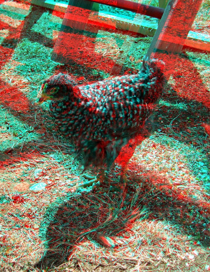The Peacock 3D Anaglyph by yellowishhaze on DeviantArt | HD ...