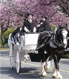 Carriage Tour - Beacon Hill Park, Victoria. One of the many attractions here in Victoria