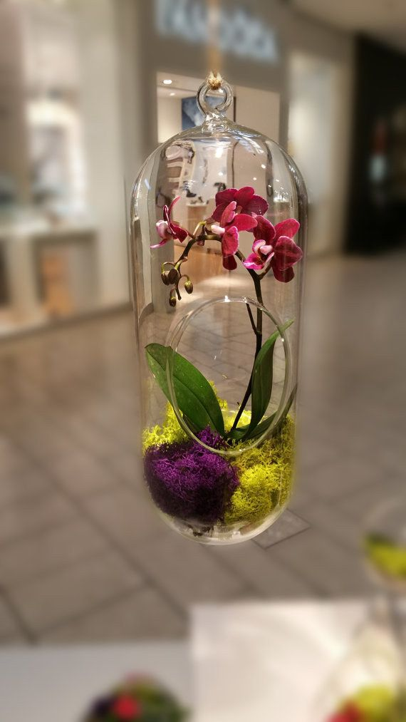This hanging orchid. | 27 Soothing Terrariums To Bring Tranquility To Your Home