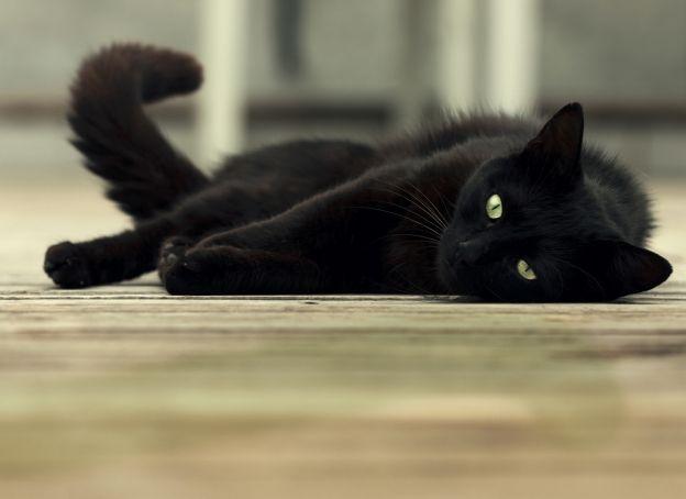Il faut le lire pour le croire : au Liban, le loto national a monté un 'coup de com' incroyable. Capturer des chats noirs, non pas pour les noyer, mais... leur offrir des vacances de luxe !