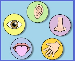 Unitat didàctica els 5 sentits