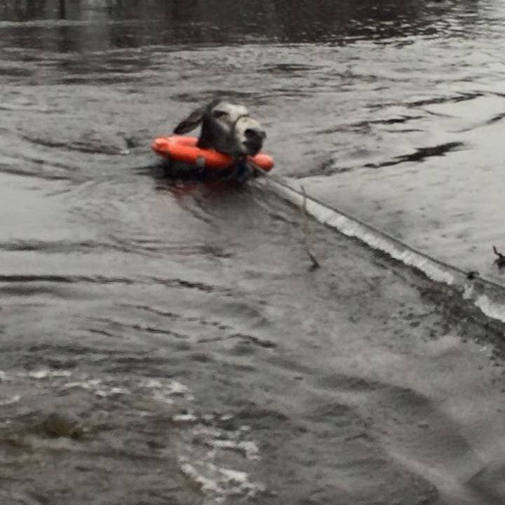 You Need To See This Picture Of A Smiling Donkey Rescued From A Flooded River In 2020 Donkey Rescue Pictures Donkey
