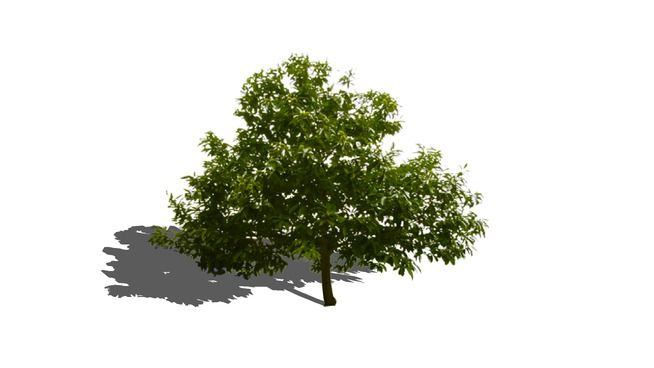 Large preview of 3D Model of Castaño ( chestnut tree )