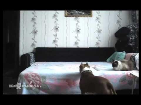 Vejam o que este cão faz quando os donos não estão!