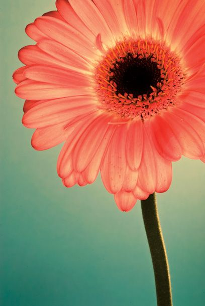 25 flower photography tips for beginners | Digital Camera World