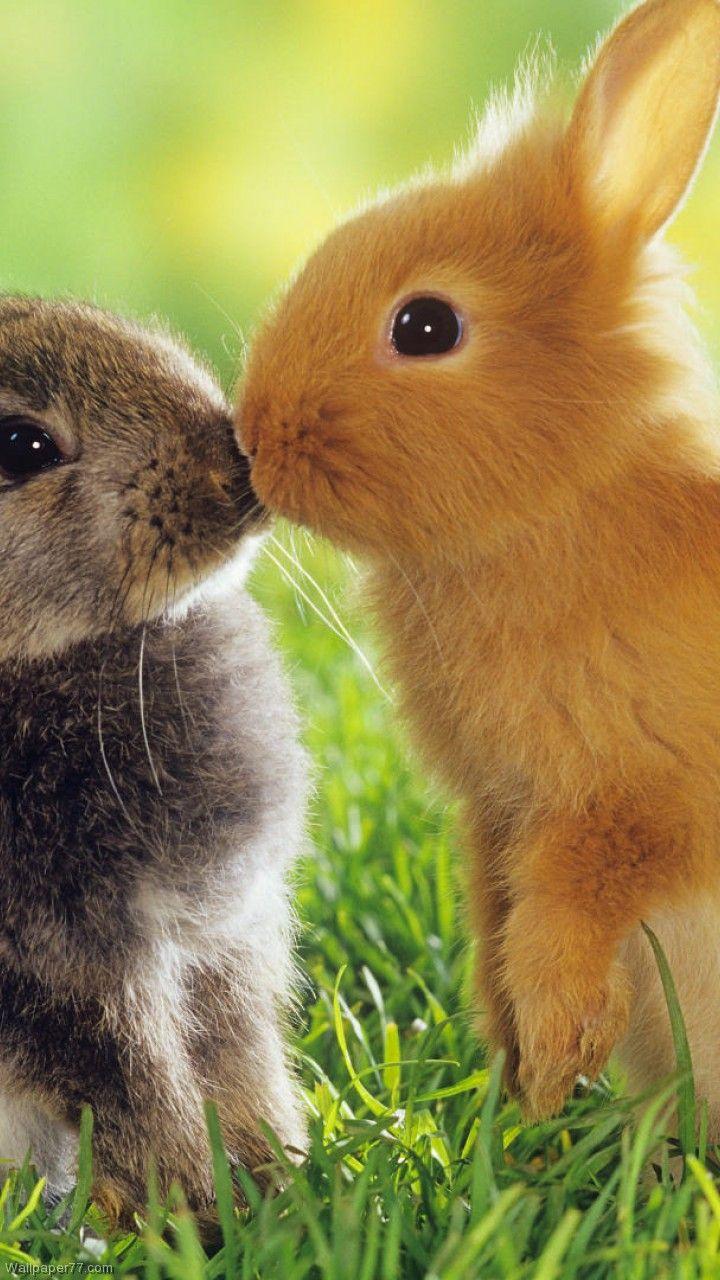 Animals Kissing