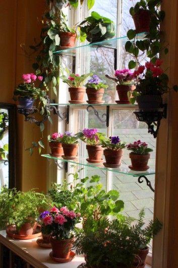 #window #garden inside.  glass/plexiglass shelves to not block light.
