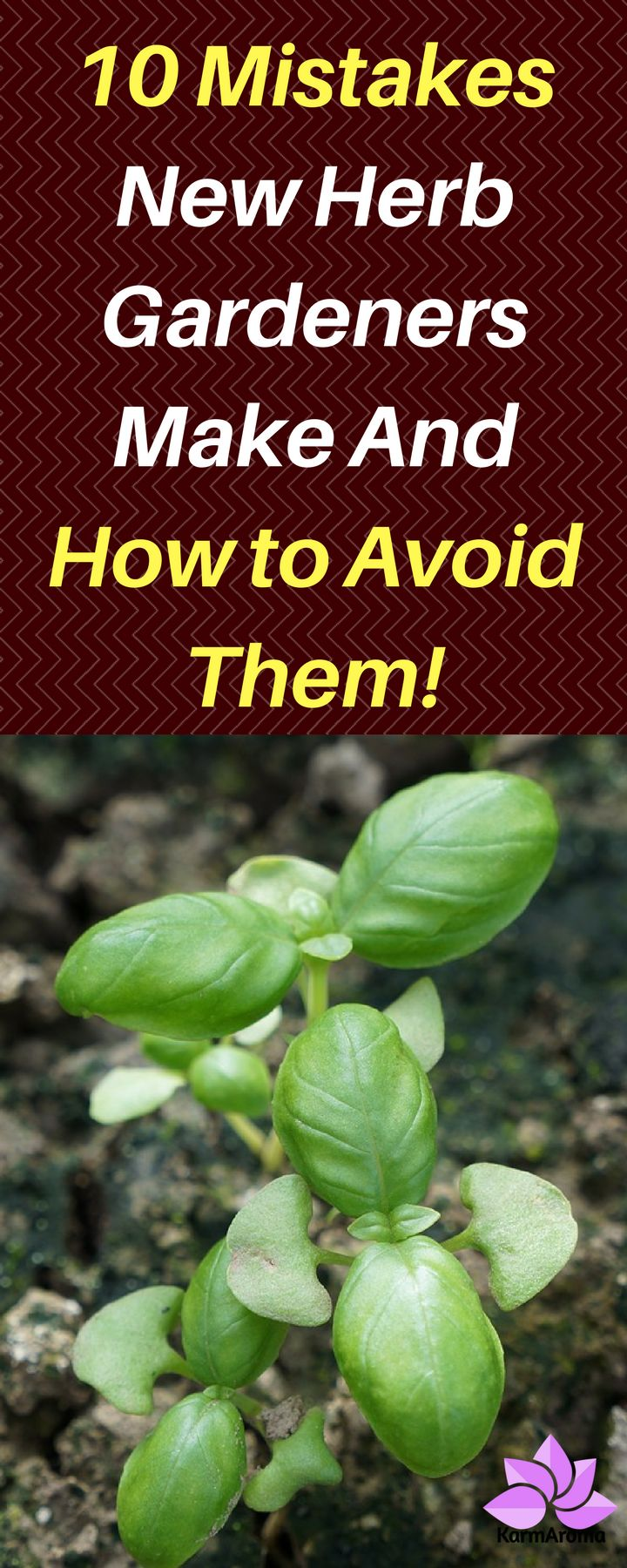 10 Mistakes New Herb Gardeners Make And How to Avoid Them!