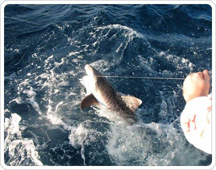 Offers on miami light tackle fishing charter services by for Miami fishing supply