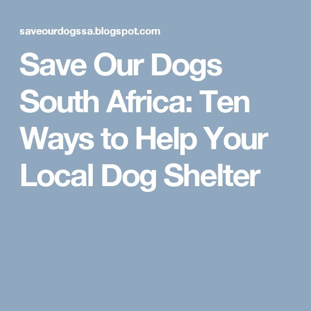 Save Our Dogs South Africa: Ten Ways to Help Your Local Dog Shelter