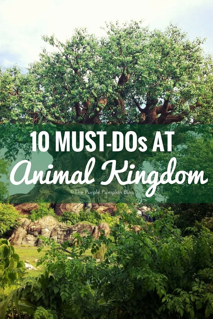 This is the second post in my must-do rides series for 100 Days Of DisneyI'm going tosharea list of the [Read More]