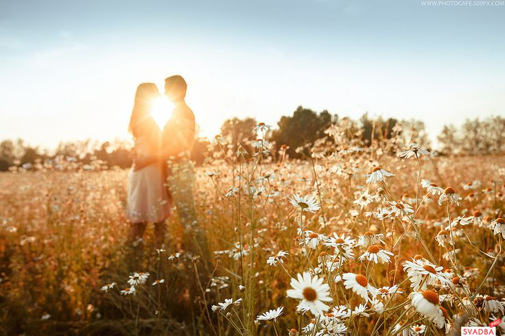 Картинки по запросу фото свадебное на закате в поле