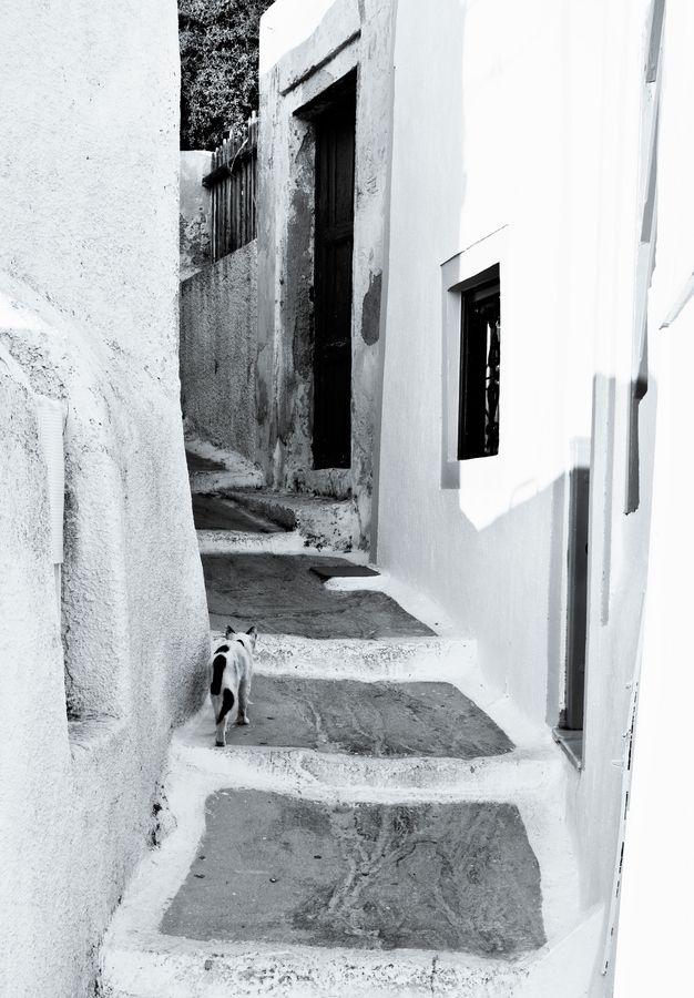 Cat, Santorini, Greece