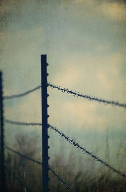30 best Barbed Wire Fence images on Pinterest | Wire fence, Chicken ...