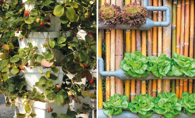 Fabriquer soi-même un potager vertical et récolter ses légumes directement dans sa cuisine.