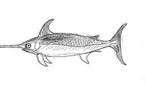 Con este tutorialpodrás aprender a dibujar un pez espada o emperador paso a paso partiendo de unos simples trazos . Más tutoriales de dibujo próximamente en:...