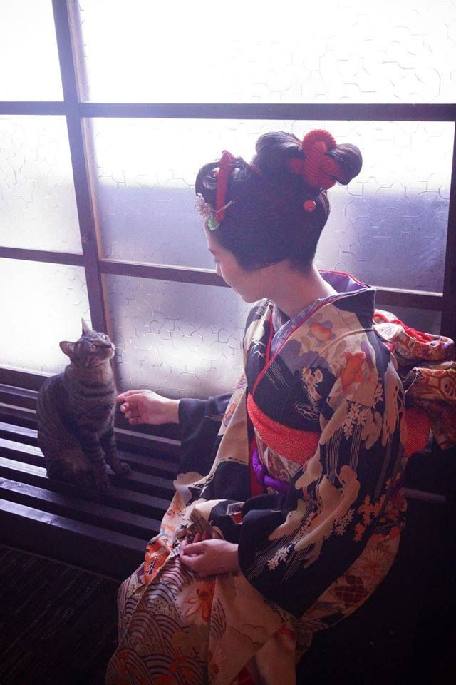 "modoribashi237: "" https://www.facebook.com/modoribashi http://twitter.com/modoribashi237 "" modoribashi237 Maiko at neko cafe 猫カフェ - Kyoto, Japan - September 2015"