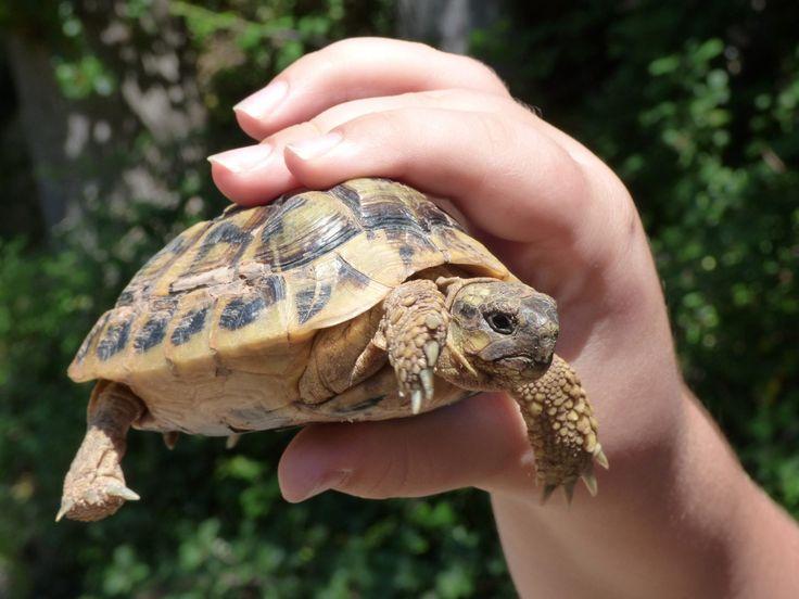 Jaký druh želvy suchozemské si pořídit do malého bytu?