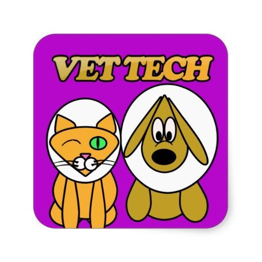 424 best Vet Tech images on Pinterest Animales, Veterinary - vet tech job description