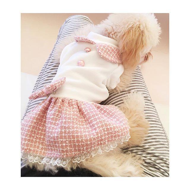 甘ったれ💋🎀 #トイプードル #甘えんぼ #生後5ヶ月 #アプリコット #ふわもこ #愛犬 #クレア #犬との暮らし #わんこ #タイニーサイズ #toypoodle #tinypoodle #dogstagram #love #cute #dog #angel #doglife #followme #puppy