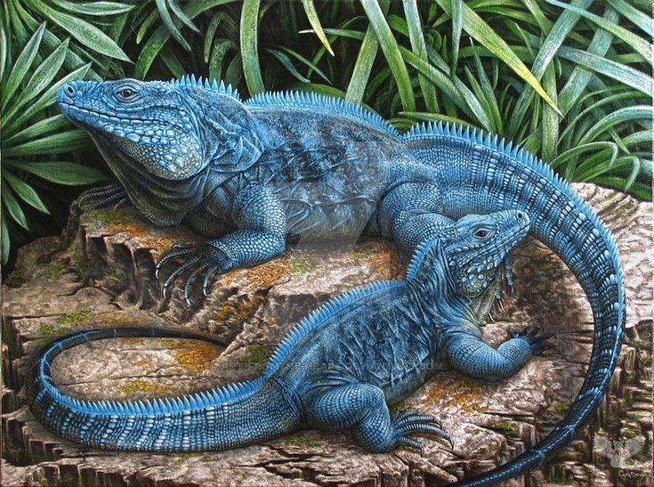 The Grand Cayman Blue Iguana By ART Fromthe HEARTdeviantart On