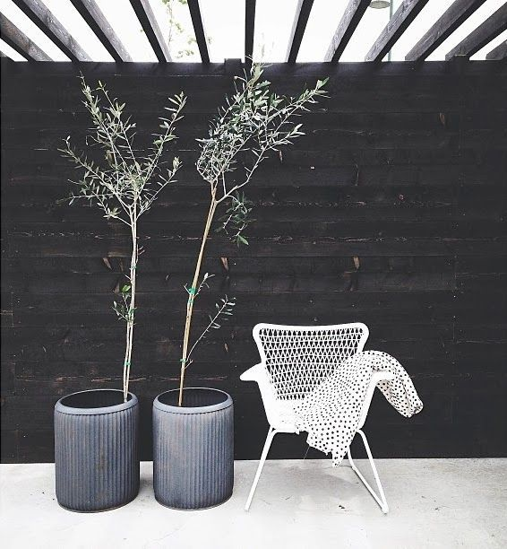 ROSEMARY IN PLANTERS FOR OUTDOORS