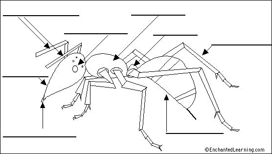 ant anatomy diagram to label