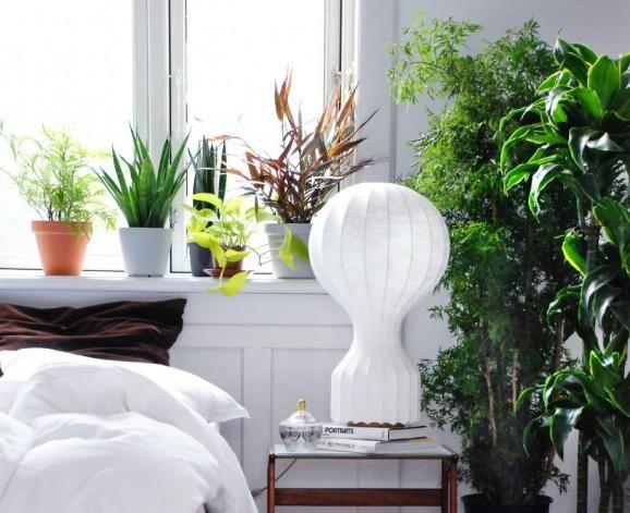 51 besten Zimmerpflanzen Bilder auf Pinterest Zimmerpflanzen - tipps pflege pflanzen wintergarten