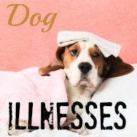 Knowing the symptoms of the most common dog illnesses could save your pup's life - really!    Check out this guide to diseases and conditions that put your little one at risk.