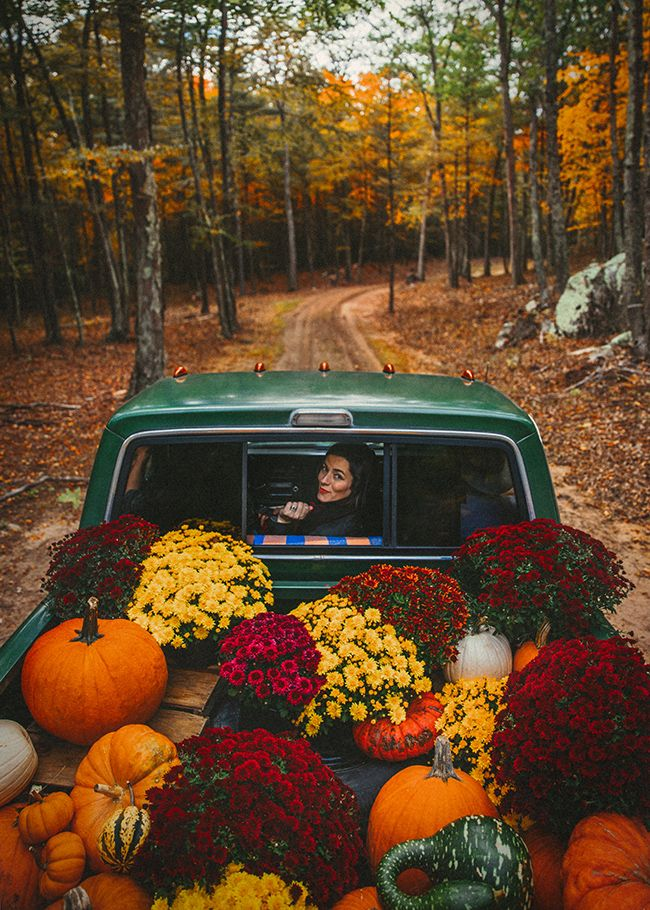 I love mums.  And a truck full of mums in the middle of the forest. Perfect.