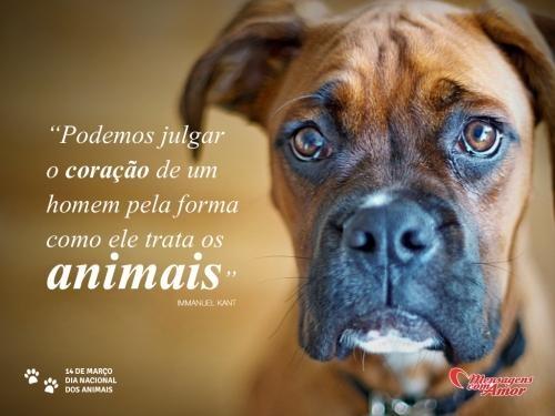 """""""Podemos julgar o coração de um homem pela forma como ele trata os animais."""" #animais #DiaDosAnimais"""