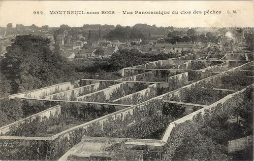 Lowtechmagazine: De fruitmuur - Peaches on the fruit walls of montreuil paris