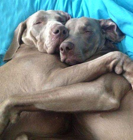 So sieht Liebe aus!  #dogs #couple